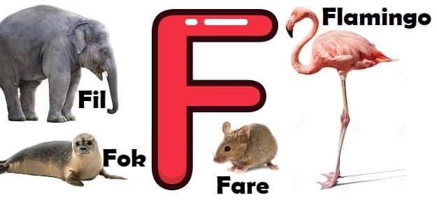 F ile başlayan hayvanlar