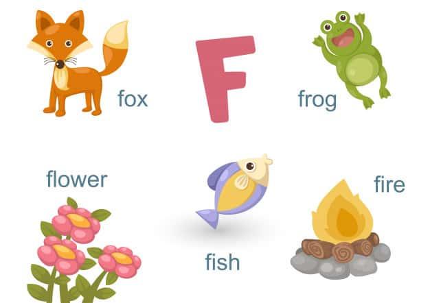 F Harfi ile Başlayan İngilizce Hayvanlar