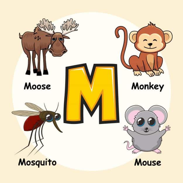 Alfabetik Sıraya Göre İngilizce Hayvan İsimleri ve Okunuşları