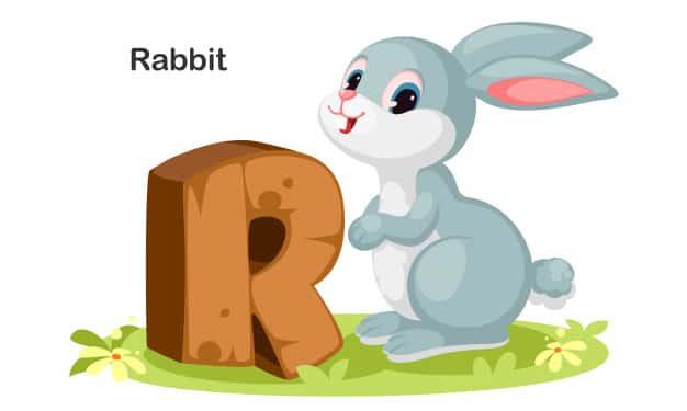 R Harfi ile Başlayan İngilizce Hayvanlar
