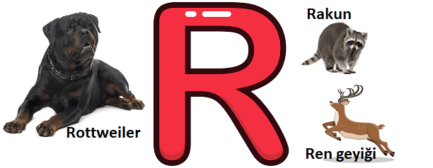 R ile başlayan hayvanlar