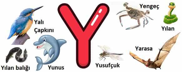 Y ile başlayan hayvanlar