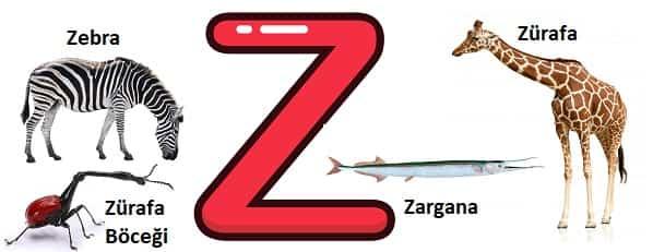 Z ile başlayan hayvanlar