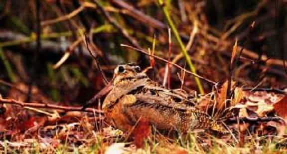 Tembel Hayvanlar: Dünyanın En Miskin Yavaş Hayvanları