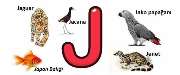 J ile başlayan hayvanlar