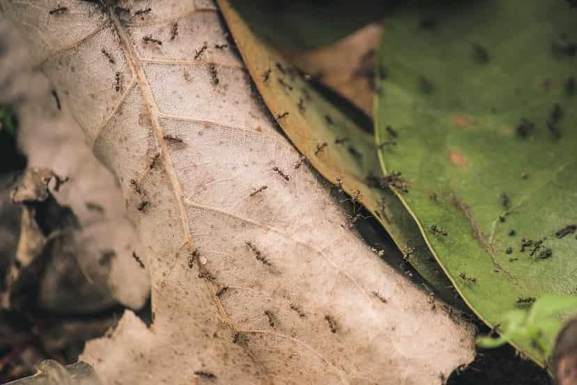 Karıncalar Ve Hiyerarşik Düzenleri