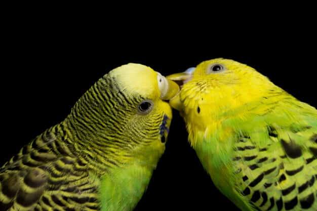 Dişi ve Erkek Muhabbet Kuşu İsimleri