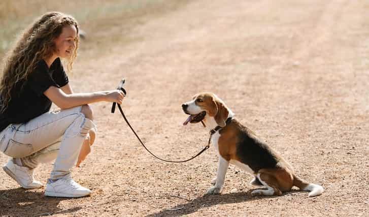 Köpek Eğitimi Oturma