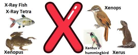 X ile Başlayan Hayvanlar